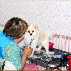 Парикмахерская для животных «Медведица»