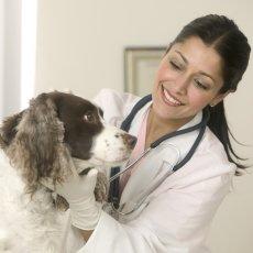 Ветеринарный врач на дом. Стрижка животных