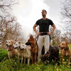 Персональная дрессировка щенков и взрослых собак