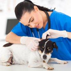 Выезд ветеринарного врача на дом