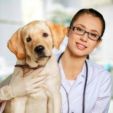 Ветеринар. Оказание помощи животным на дому