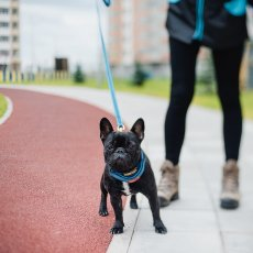 Выгул собак в Новосибирске