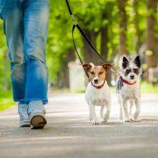 Выгул собак/уход за животными