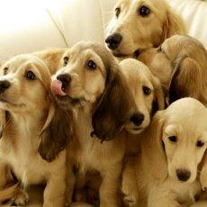 Стрижка собак и кошек, выезд на дом