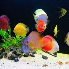 Чистка аквариума, запуск аквариума, лечение рыб