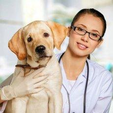 Ветеринар. Ветеринар на дом. Ветеринарная помощь
