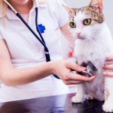 Ветеринар на дом. Инструктор по вязке