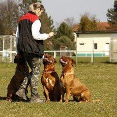 Дрессировка собак г. Нижнекамск и пригород