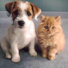 Стрижка собак и кошек. Выезд.
