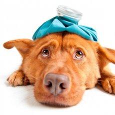 Круглосуточный ветеринар
