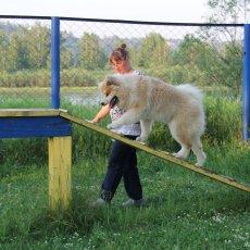 Дрессировка любых пород собак