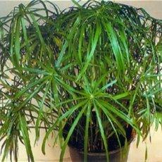 Подбор и обслуживание комнатных растений