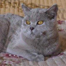Стрижка кошек в Санкт-Петербурге