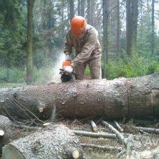 Рубка и обрезка деревьев