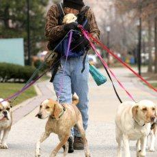 Выгул собак в Барнауле