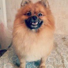 Стрижка собак в Москве