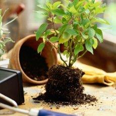 Услуги по подбору и уходу за комнатными растениями