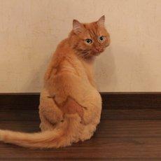 Прически для кошек