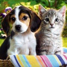 Помощь в уходе за животными