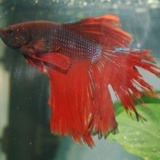 Лечение аквариумных рыбок