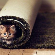 Стирка и чистка ковров