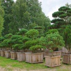 Садовые услуги в Энгельсе