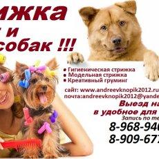 Стрижка кошек и собак возможен выезд на дом