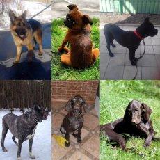 Дрессировка собак в ЗАО
