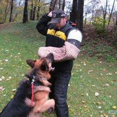Дрессировка и воспитание собак всех пород