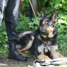 Дрессировка собак с выездом и на площадке