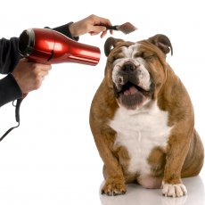 Груминг собак на дому