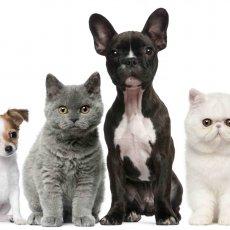 Стрижка собак и кошек с выездом на дом