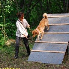 Дрессировка - Школа для собак и владельцев
