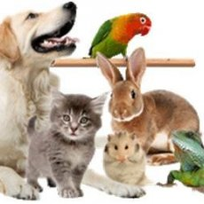 Услуги ветеринарного врача на дому