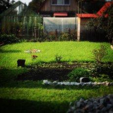 Создание посевного газона