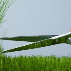 Покос травы, услуги мотокосы в Тюмени
