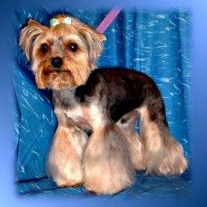 Стрижка собак на дому недорого. Груминг. Тримминг. Выезд опытного грумера.