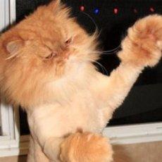 Стрижка котов и кошек на дом. Стрижка сживотных. Выезд