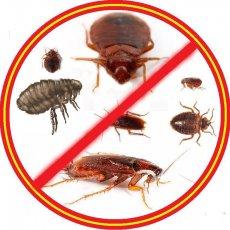 Уничтожение тараканов клопов мышей