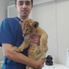 Лапороскопическая стерилизация кошек и собак