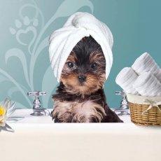 Стрижка собак и котов - выездной груминг