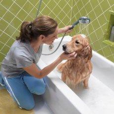 Стрижка собак и кошек, чистка зубов
