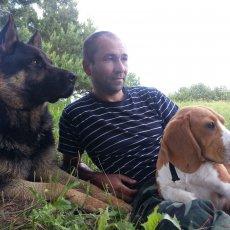 Дрессировка и воспитание собак в Казани